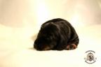 Puppies Zorka&Walter 2 weken oud 292