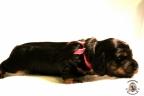 Puppies Zorka&Walter 2 weken oud 313
