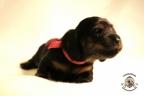Puppies Zorka&Walter 2 weken oud 337