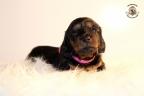 ZorkaWalter-puppies-35-weken-oud-282n
