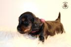 ZorkaWalter-puppies-35-weken-oud-287n