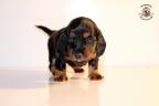 ZorkaWalter-puppies-35-weken-oud-307n