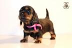 ZorkaWalter-puppies-35-weken-oud-363n