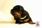 Puppies Zorka&Walter 2 weken oud 459