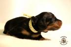 Puppies Zorka&Walter 2 weken oud 472