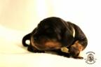 Puppies Zorka&Walter 2 weken oud 522