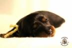 Puppies Zorka&Walter 2 weken oud 551