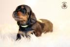 ZorkaWalter-puppies-35-weken-oud-096n