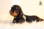 ZorkaWalter-puppies-35-weken-oud-126n