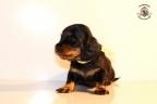 ZorkaWalter-puppies-35-weken-oud-133n