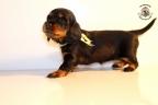 ZorkaWalter-puppies-35-weken-oud-138n