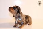 Zorka&Walter puppies 3,5 weken oud 031n