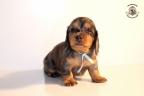 Zorka&Walter puppies 3,5 weken oud 034n