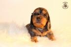 Zorka&Walter puppies 3,5 weken oud 053n