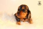 Zorka&Walter puppies 3,5 weken oud 054n