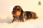 Zorka&Walter puppies 3,5 weken oud 062n