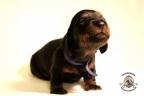 Puppies Zorka&Walter 2 weken oud 174