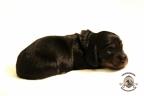 Puppies Zorka&Walter 2 weken oud 192