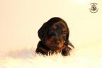 ZorkaWalter-puppies-35-weken-oud-512n