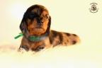 ZorkaWalter-puppies-35-weken-oud-192n