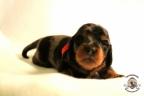 Puppies Zorka&Walter 2 weken oud 385
