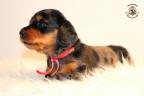 ZorkaWalter-puppies-35-weken-oud-398n