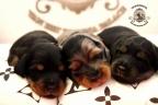 Aria en Sebi puppies 2 weken oud