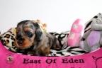 Pups 4 weken oud Aria en Sebi