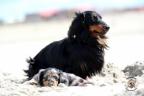 Puppies Aria en Sebi strand 11-08-2017