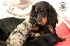 Sebi op bezoek bij puppies 3 weken oud