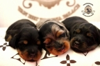 Aria en Sebi puppies 2 weken oud 035n
