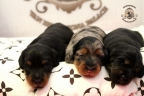 Aria en Sebi puppies 2 weken oud 043n