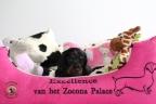 Puppie 4 weken oud Aria en Sebi 139n