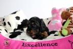 Puppie 4 weken oud Aria en Sebi 149n