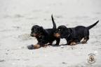 Puppies Aria en Sebi strand 11-08-2017 084n