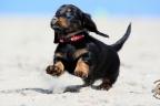 Puppies Aria en Sebi strand 11-08-2017 176n