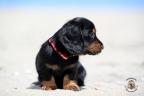 Puppies Aria en Sebi strand 11-08-2017 182n