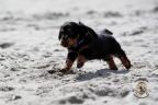 Puppies Aria en Sebi strand 11-08-2017 202n