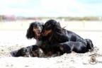 Puppies Aria en Sebi strand 11-08-2017 299n