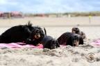 Puppies Aria en Sebi strand 11-08-2017 352n
