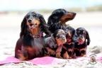 Puppies Aria en Sebi strand 11-08-2017 366n