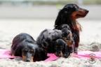 Puppies Aria en Sebi strand 11-08-2017 386n