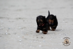 Puppies Aria en Sebi strand 11-08-2017 409n