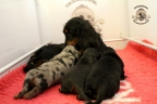 Sebi op bezoek bij puppies 3 weken oud 005n