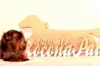 Puppies Zorka 9 weken Bella 4 weken 645-1