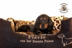 Sesja puppies Zorka 6 weken Bella 1 week1 419
