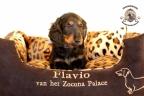 Sesja puppies Zorka 6 weken Bella 1 week1 426
