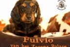 Sesja puppies Zorka 6 weken Bella 1 week1 510