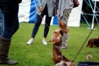 Hondenshow Limburgia 2017 084n