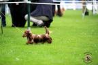Hondenshow Limburgia 2017 113n